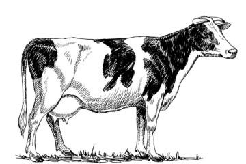 Lignes d'abattage bovins